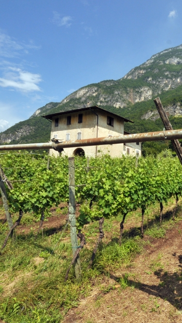 vineyard_trentino_3_mob